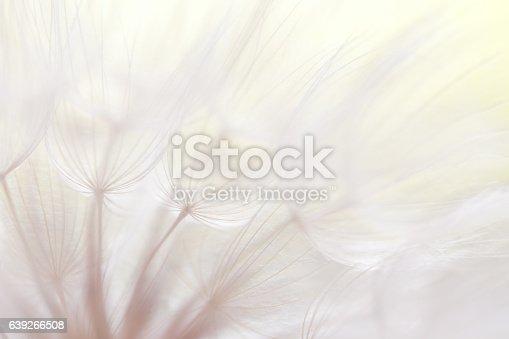 640082034istockphoto Dandelion seed 639266508