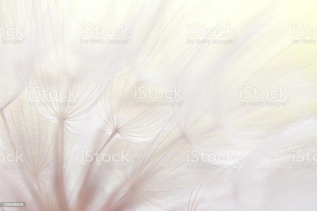 Dandelion seed  – Foto