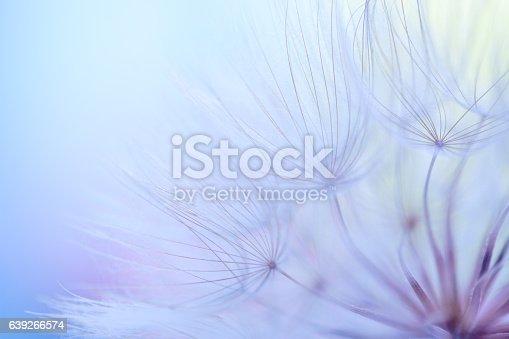 640082034istockphoto Dandelion seed 639266574