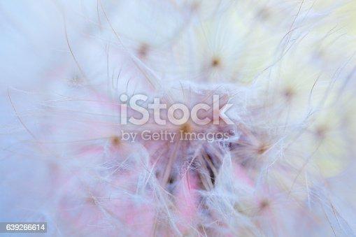 640082034istockphoto Dandelion seed 639266614