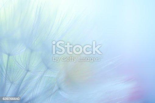 640082034istockphoto Dandelion seed 639266640