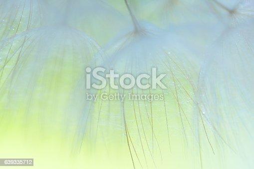 640082034istockphoto Dandelion seed 639335712