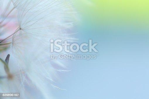 640082034istockphoto Dandelion seed 639896162