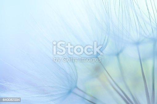 istock Dandelion seed 640082034