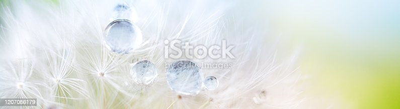 184093103 istock photo Dandelion seed with dew drops. Beautiful soft spring background. Copy space. Soft focus abstract background. 1207086179