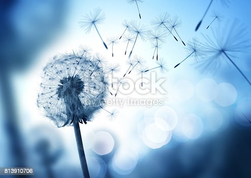 istock Dandelion seeds blowing in the wind 813910706