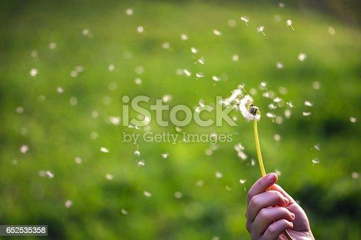istock Dandelion seeds flying 652535358