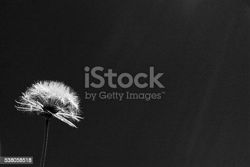 477312602istockphoto Dandelion Spores Copy Space - Noir 538058518