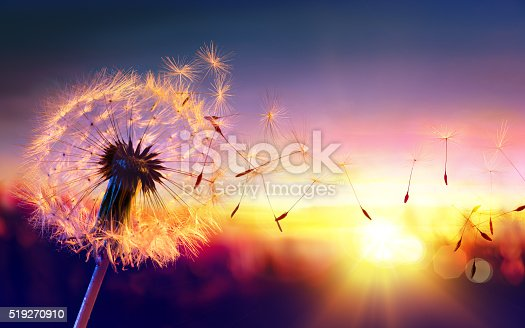 istock Dandelion To Sunset - Freedom to Wish 519270910