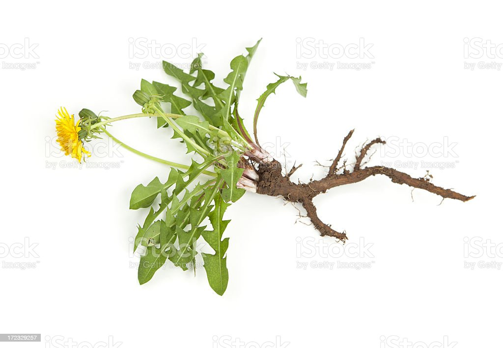Dandelion Weed stock photo