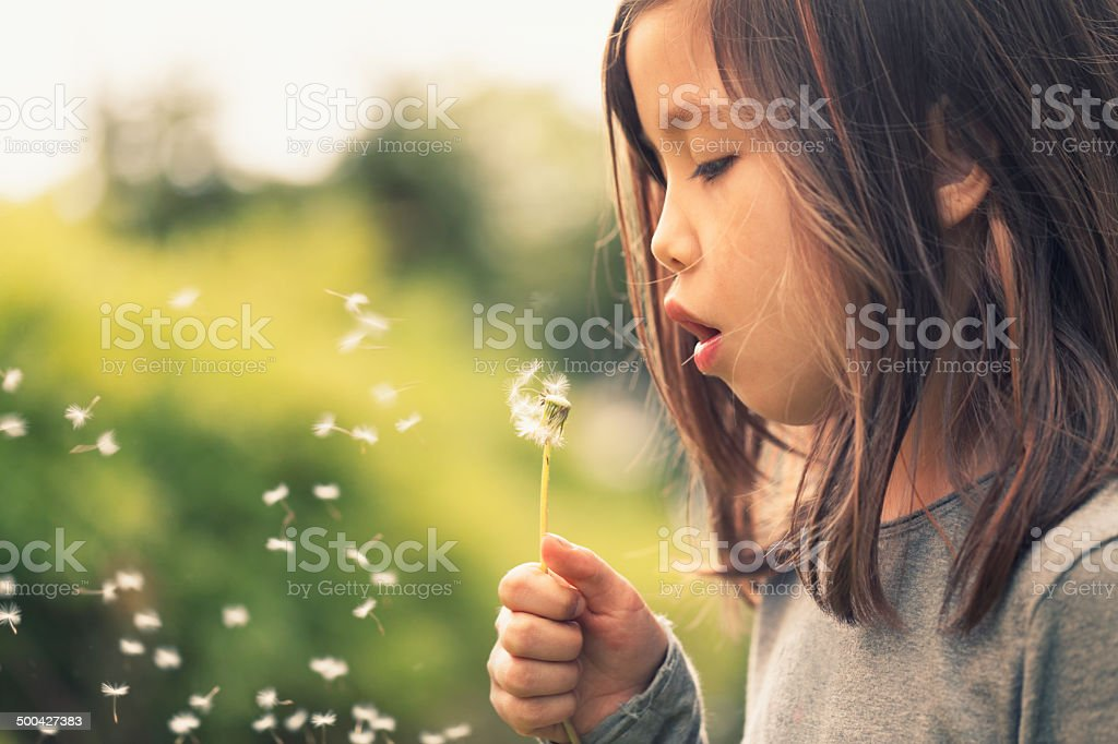 Dandelion wish stock photo