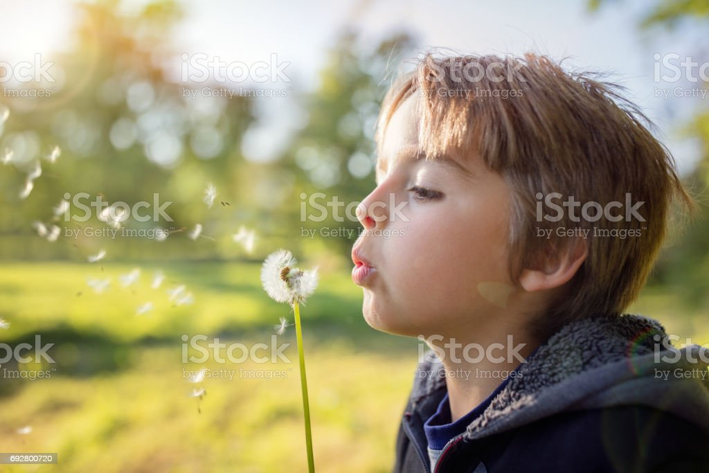 Dandelion wishes of a child stock photo