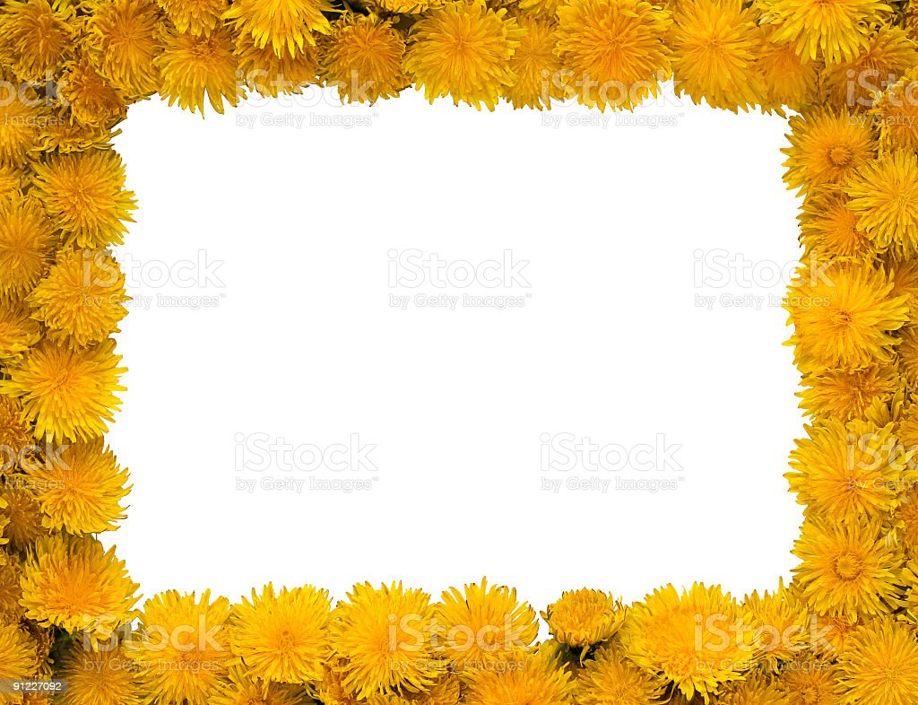 Dandelions frame royalty-free stock photo