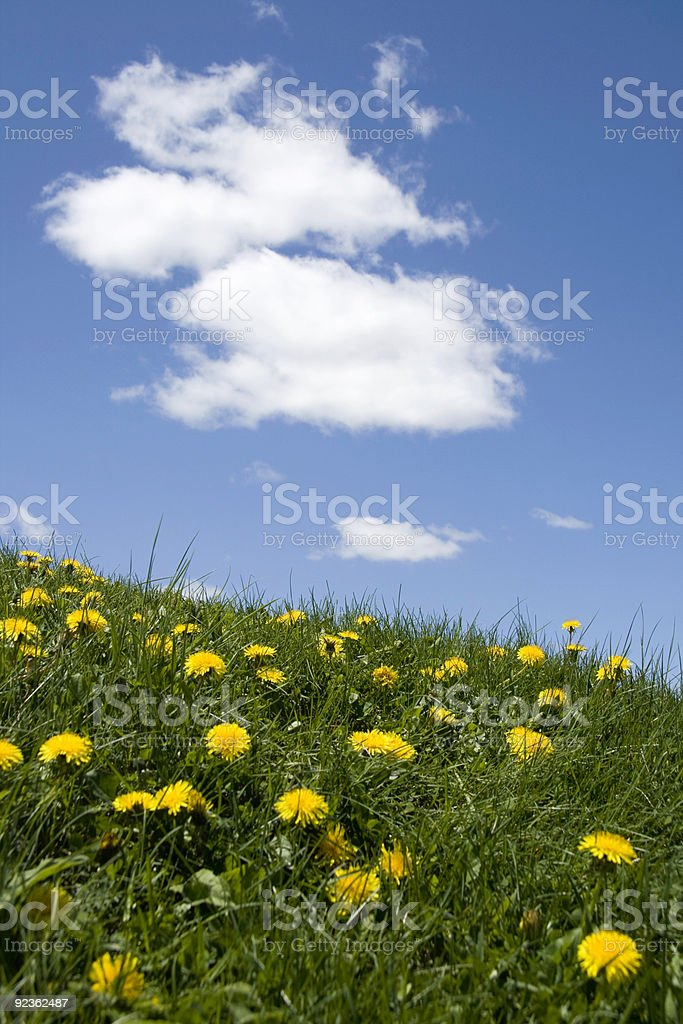 Dandelions, grass and open sky royalty-free stock photo