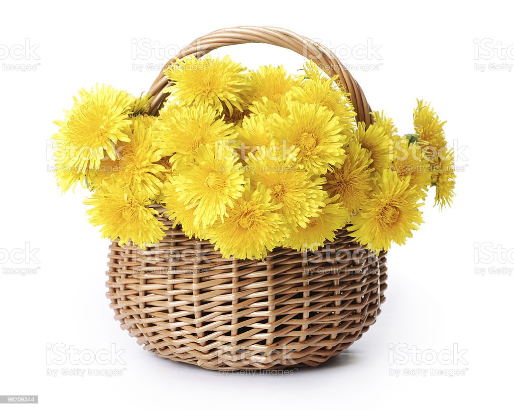 Dandelions in a basket royalty-free stock photo