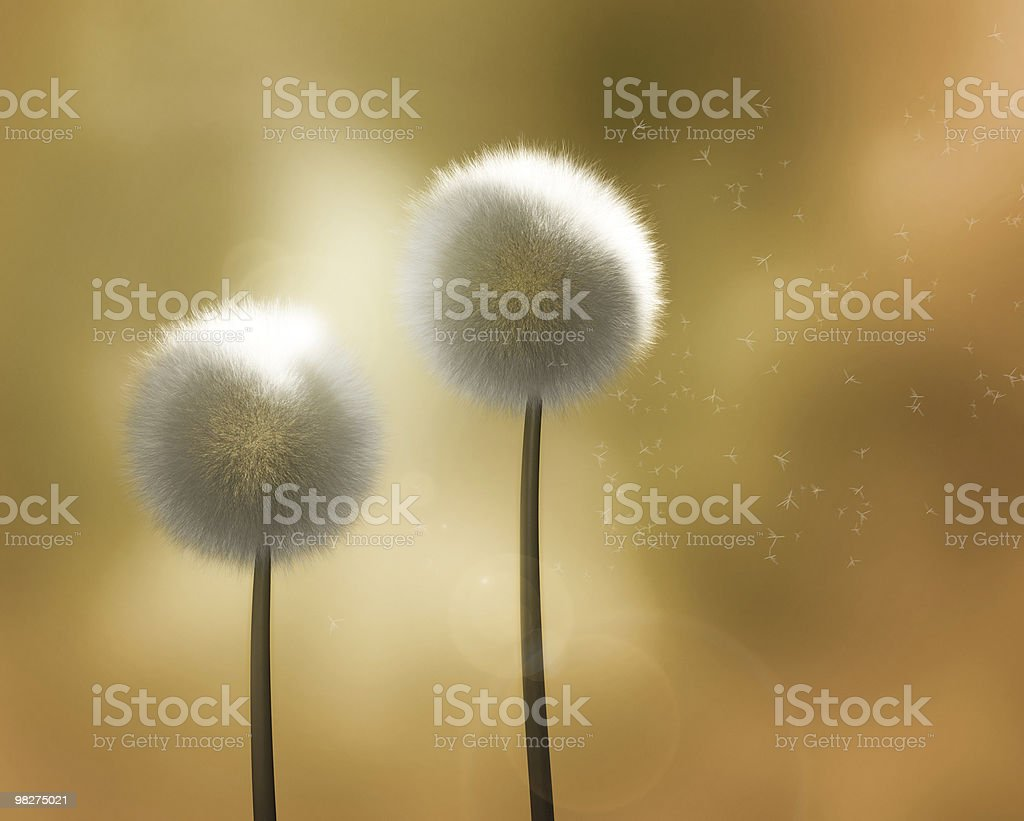 Dandelions in the Wind, Golden Background royalty-free stock photo