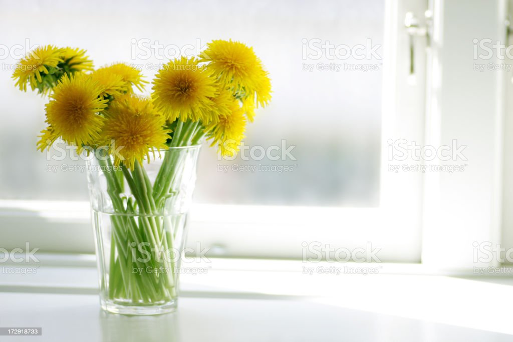 Dandelions in Window stock photo