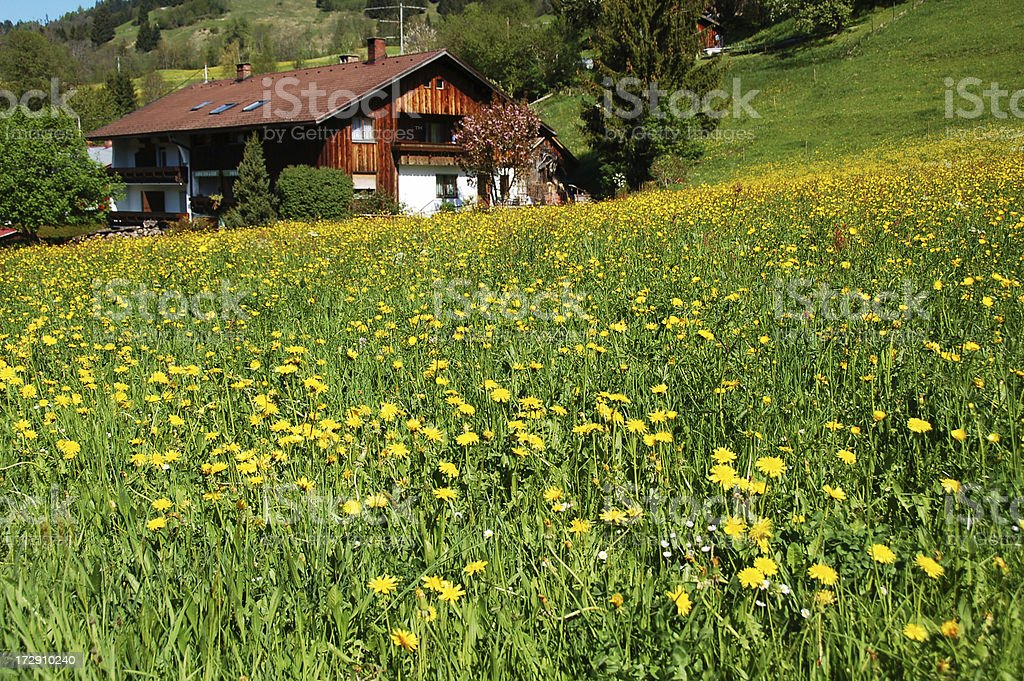 Dandelions Meadow with Mansion royalty-free stock photo