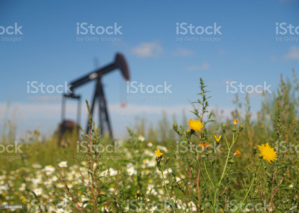 Dandelions with Oil Well Pumpjack royalty-free stock photo