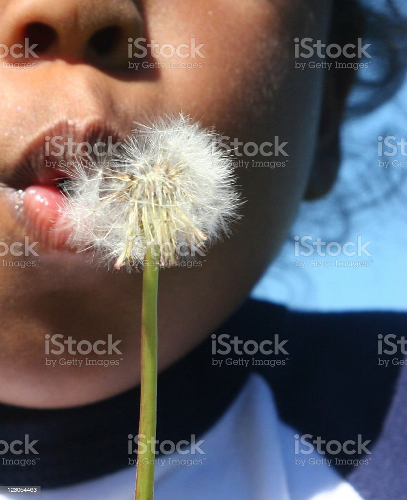 Dandy Blow - Royalty-free Black Color Stock Photo