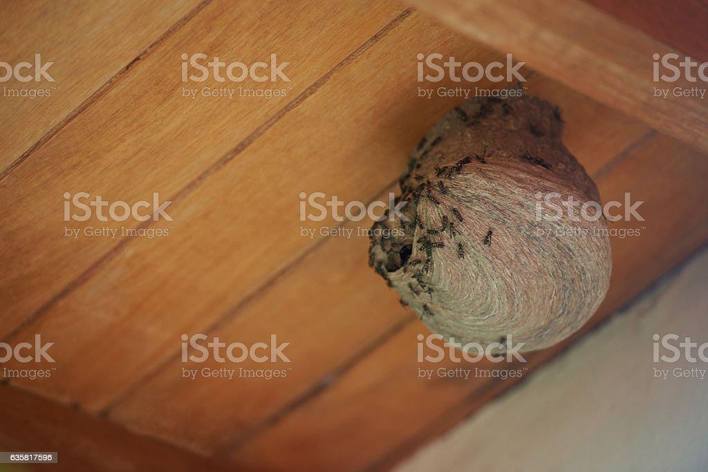 Danger nest of wasps stock photo