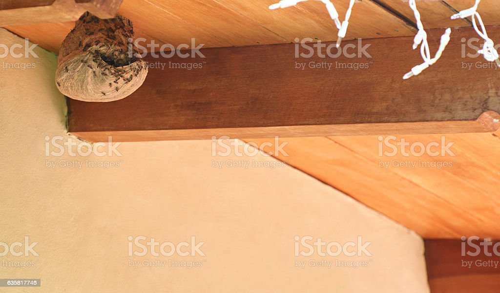 Dangerous bee insects stock photo