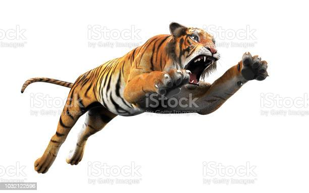 Dangerous bengal tiger with clipping path picture id1032122596?b=1&k=6&m=1032122596&s=612x612&h=uyo3ywwk ej9lth3xg2hg6pfwq3va0nffmoqlvpecby=