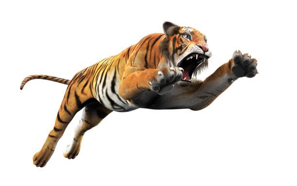Gevaarlijke Bengaalse tijger met het uitknippad. foto