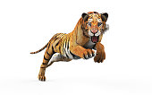 Dangerous Bengal Tiger with Clipping Path.