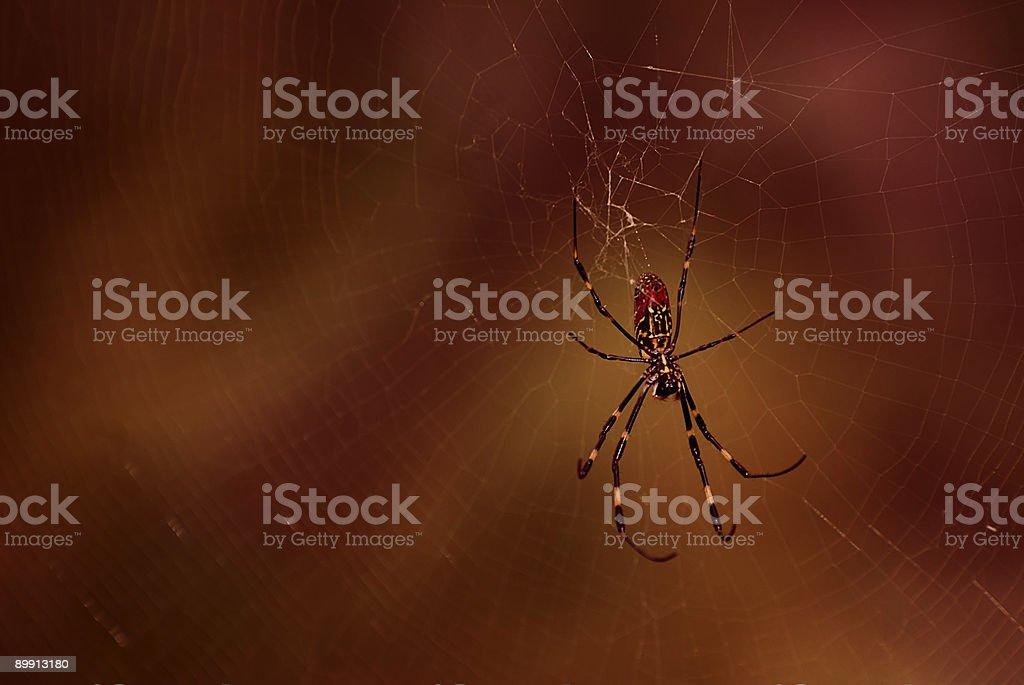 Gefährliche-Käfer Lizenzfreies stock-foto