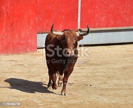 istock Dangerous bull 1129486728