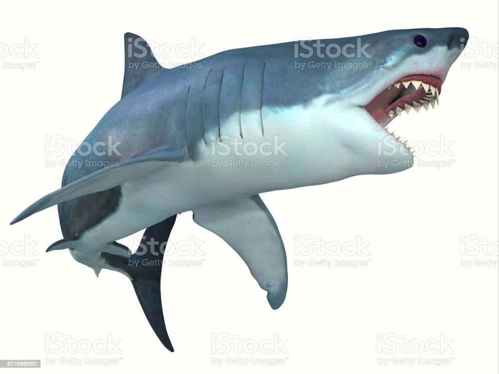 Dangerous Great White Shark stock photo