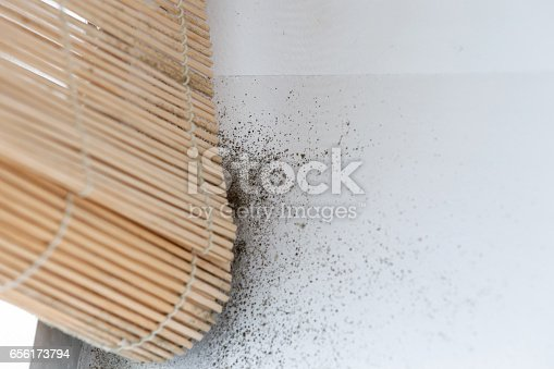 656168432 istock photo A dangerously mouldy white wall 656173794