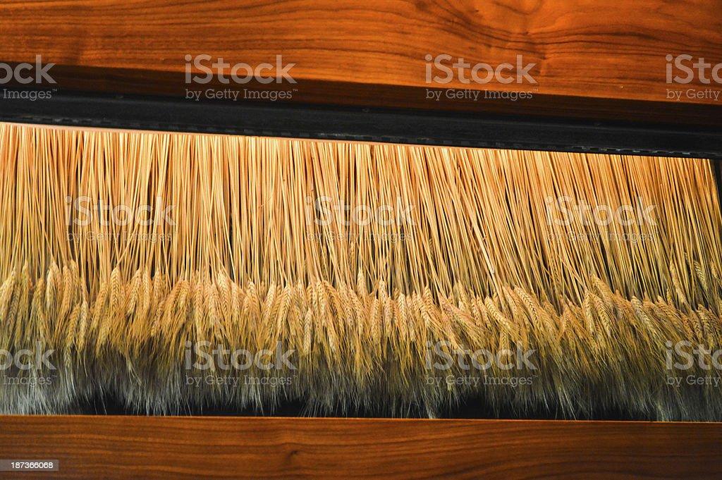 Dangling wheat display royalty-free stock photo