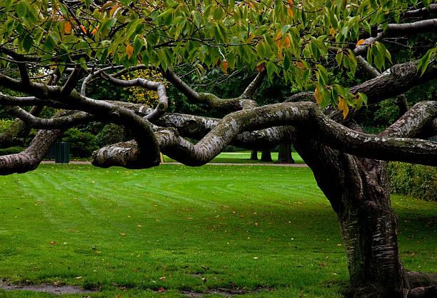 danish tree stock photo