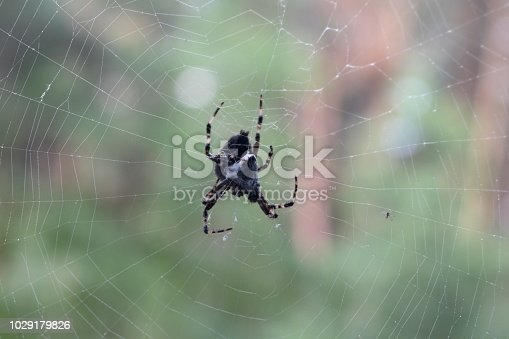 Close-up of an arachnid and a fly