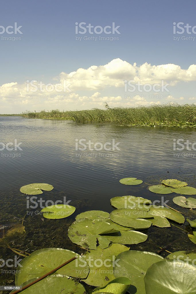 donaudelta royalty-free stock photo