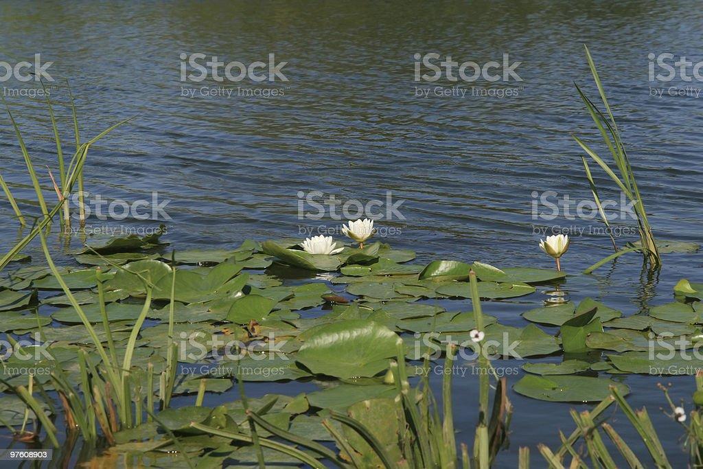 Danube Delta royalty-free stock photo