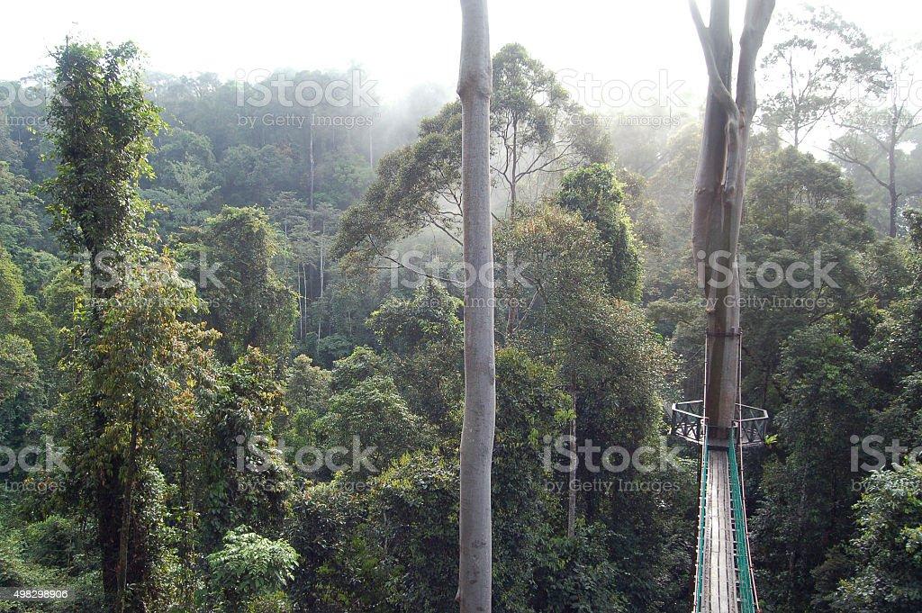 Danum Valley Canopy Walkway Borneo stock photo