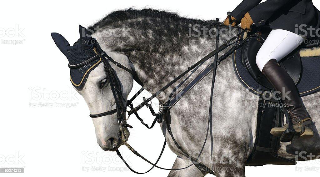 Dapple-gray horse royalty-free stock photo