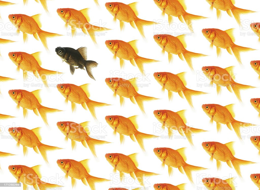 Dare to be Different stock photo