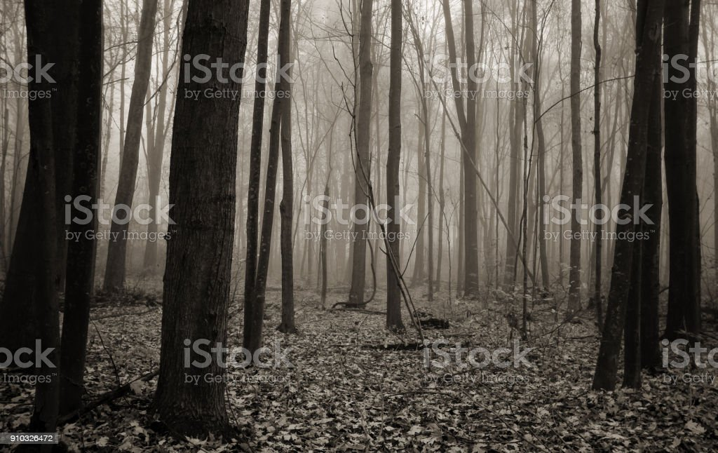 Dark And Haunted Foggy Forest Abstract In Black And White stock photo