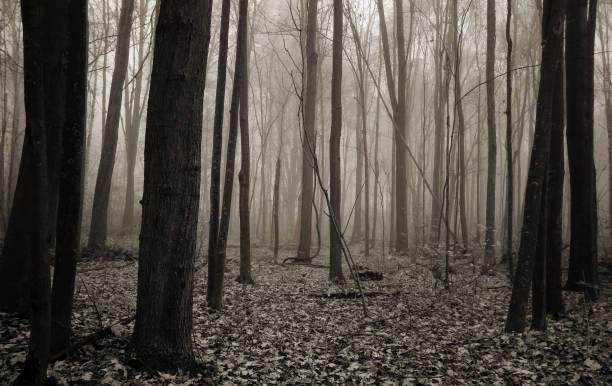 Résumé de la Forêt brumeuse sombre et hanté en noir et blanc - Photo