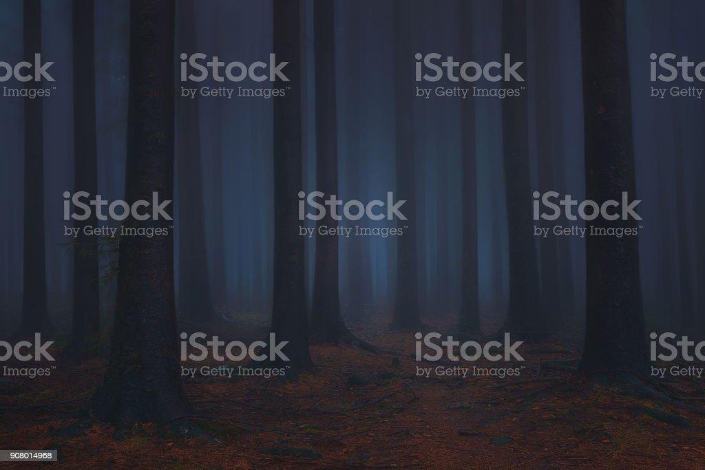 bosque de ensueño fantasía oscura y da miedo - foto de stock