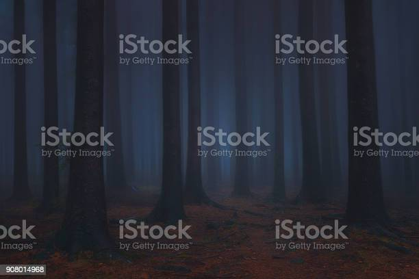 Photo of dark and scary fantasy dreamy forest
