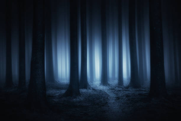 dark and scary forest at night stock photo