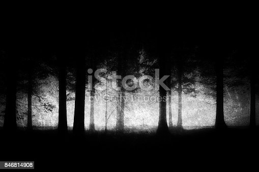 dark and scary forest with grungy textures
