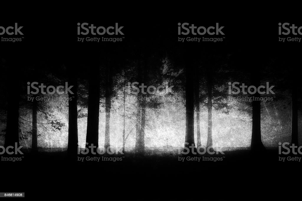 dark and scary forest with grungy textures stock photo