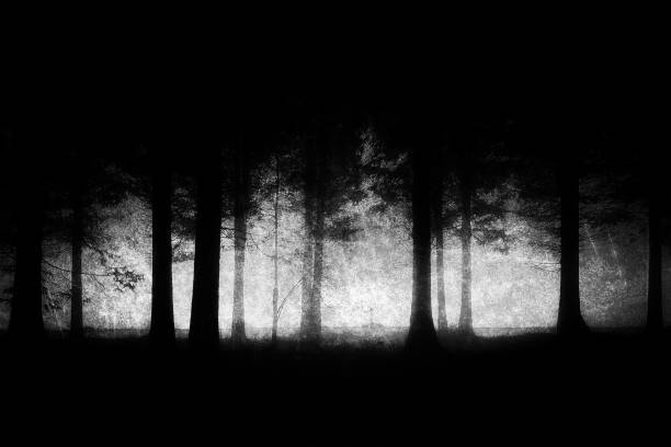 dark and scary forest with grungy textures - trees in mist stock pictures, royalty-free photos & images