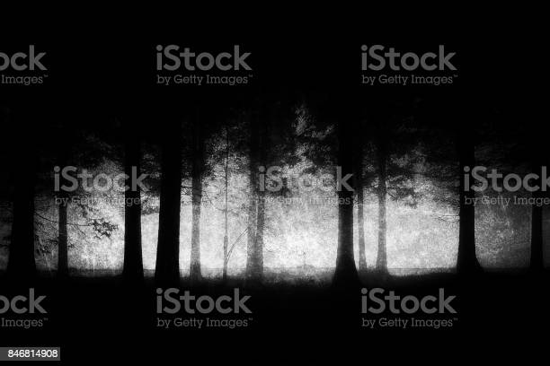 Photo of dark and scary forest with grungy textures